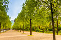 Tiergarten view with rows of trees in berlin germany Royalty Free Stock Photo