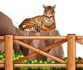 A tiger above the cliff illustration of on white background Stock Image