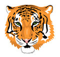 Tiger abstract vector illustration of head Stock Image