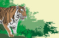 Tiger animals wild realistic illustration art vector Royalty Free Stock Photography