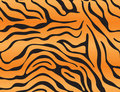 Tiger Background Stock Photo