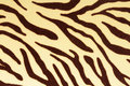 Tiger background animal skin texture photography Royalty Free Stock Photography