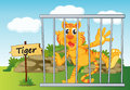 Tiger in cage illustration of a and wooden board Stock Photo