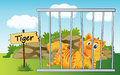 Tiger in cage illustration of a and wooden board Royalty Free Stock Photos