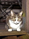 Tiger cat on a wooden balcony Stock Image