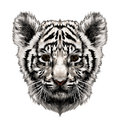 Tiger cub head sketch vector