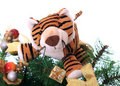 Tiger cub on a new-year tree. Royalty Free Stock Photo