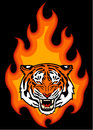 Tiger and fire head on illustration for tattoo or your design Stock Image