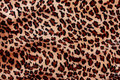 Tiger fur texture of ready to use for your design Royalty Free Stock Image