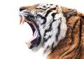 Tiger fury Royalty Free Stock Photo