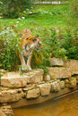 Tiger In Green Nature