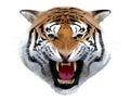 Tiger Head. Illustration.