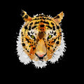 Tiger head made of colorful splashes on black background Stock Photos