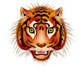 Tiger head - vector Stock Image