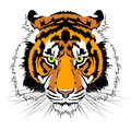 Tiger head vector illustration of Royalty Free Stock Photography