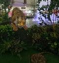 stock image of  Tiger hunting prey