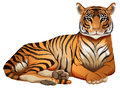 A tiger illustration of on white background Royalty Free Stock Photography