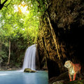 Tiger in the jungle with waterfall and sun beam Royalty Free Stock Photography
