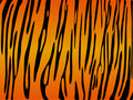 Tiger print background Royalty Free Stock Images