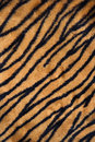 Tiger print carpet Royalty Free Stock Image