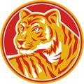Tiger Prowling Head Circle Retro Royalty Free Stock Photo