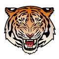 Tiger roaring s head isolated on white color illustration Royalty Free Stock Photos