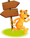 A tiger running and the empty signboards Royalty Free Stock Photo