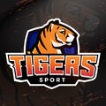 Tiger shield sport mascot template. Premade football, basketball or baseball patch design. College league insignia Royalty Free Stock Photo