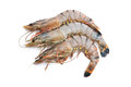 Tiger shrimps Stock Photos