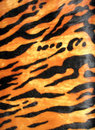 Tiger skin background, fashion diversity, Stock Photo