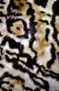 Tiger skin pattern conch design Royalty Free Stock Photo