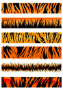 Tiger skin patterns Royalty Free Stock Photo