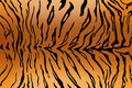 Tiger skin texture Royalty Free Stock Photos