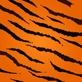Tiger skin vector pattern. Royalty Free Stock Photo