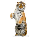 Tiger standing up Royalty Free Stock Photo
