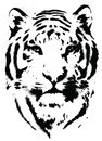 Tiger stencil vector isolated illustration Stock Images