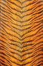 Tiger striped pattern Royalty Free Stock Images