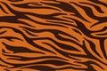 Tiger stripes pattern, animal skin, line background. Vector