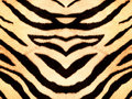 Tiger style fabric texture Royalty Free Stock Images