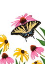 Tiger Swallowtail Butterfly and Wildflowers Stock Photos