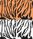 Tiger texture Royalty Free Stock Photo
