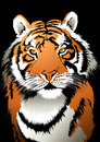 Tiger vector illustration of a Stock Photography