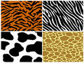 Tiger, zebra, cow and giraffe print Royalty Free Stock Images