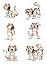 Tigers in six different positions illustration of the on a white background Royalty Free Stock Image