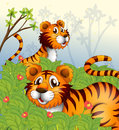 Tigers in the woods illustration of Stock Images