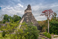 Tikal national park in guatemala Stock Images