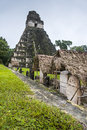 Tikal pyramids one of the best preserved mayan ruin in the national park of Royalty Free Stock Image