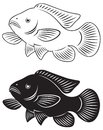 Tilapia fish the figure shows the Royalty Free Stock Photo
