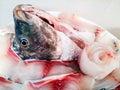 Tilapia fish head