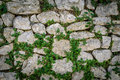 Tiled stack stone wall with green creeper plant as background